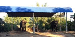 Estacionamento de Elefantes